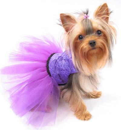 Одежда для Йоркширского терьера - Одежда для собак. Интернет ...