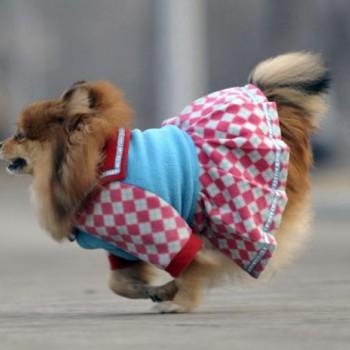 Зимняя обувь олх харьков собаки приколы