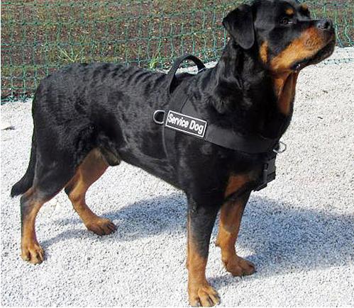 Шлейка для собаки фото