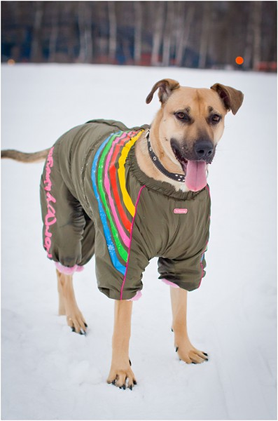 Одежда для собак, Димон-Камон