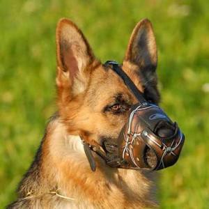 Как правильно выбрать намордник для собаки - Димон-Камон