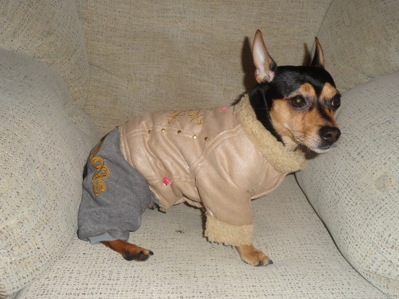 Как купить одежду для собаки. . Породы собак - Рубрика Пинчеры и шнауцеры.