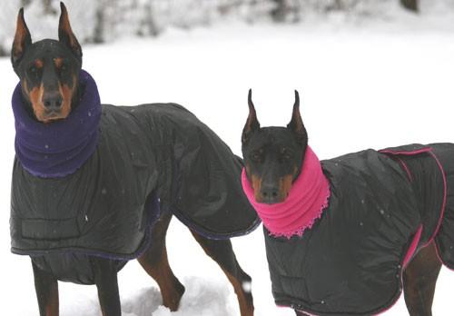 Домик для двух собак